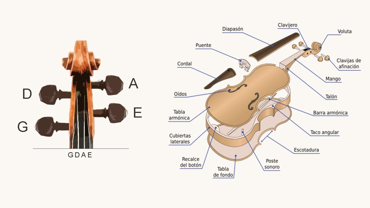 estructura violin